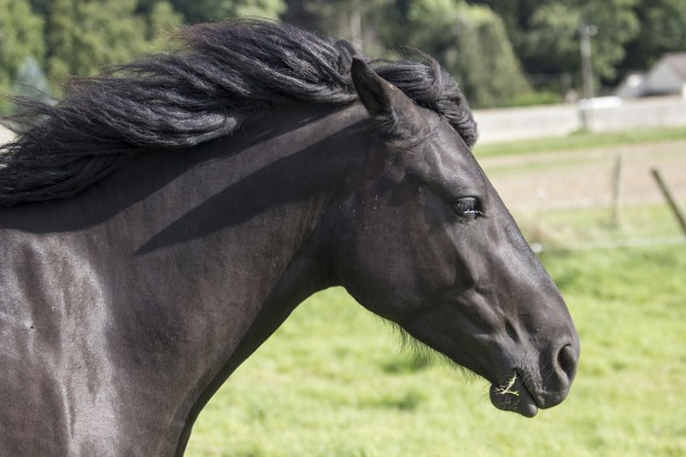 Cours de dressage ou travail de musculation de votre cheval
