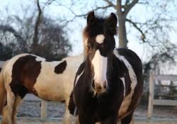 Le HDN labellisé qualité FFE « cheval d'étape » 2016