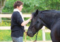 stage renforcement de la complicité avec son cheval