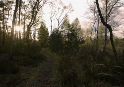 Le plaisir de la randonnée équestre avec le Haras du Diamantnoir