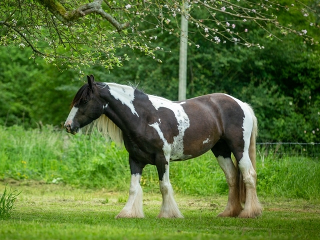 cheval pré finesse