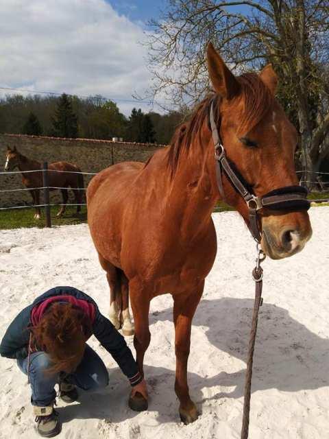 equicie cheval baika