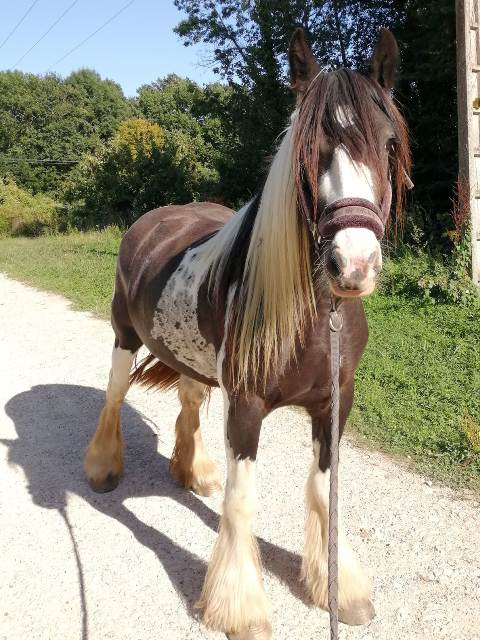 equicie cheval finesse