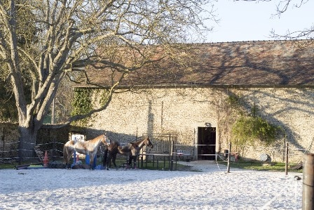 carriere haras diamantnoir