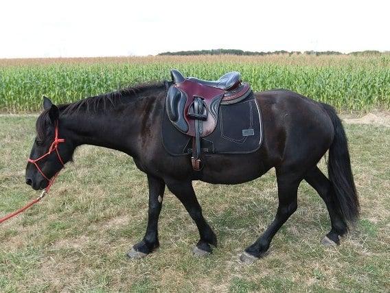cheval merens randonnee